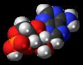 120px-Cyclic-adenosine-monophosphate-3D-spacefill